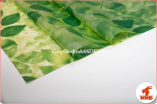 Hình ảnh cuộn giấy dán kính hình lá cây xanh mã A41