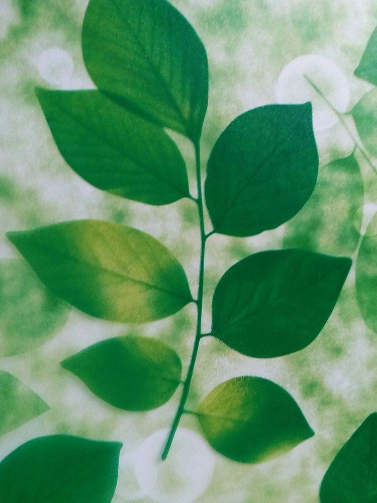 Ảnh chụp chi tiết hình lá cây xanh của mẫu giấy dán kính A41