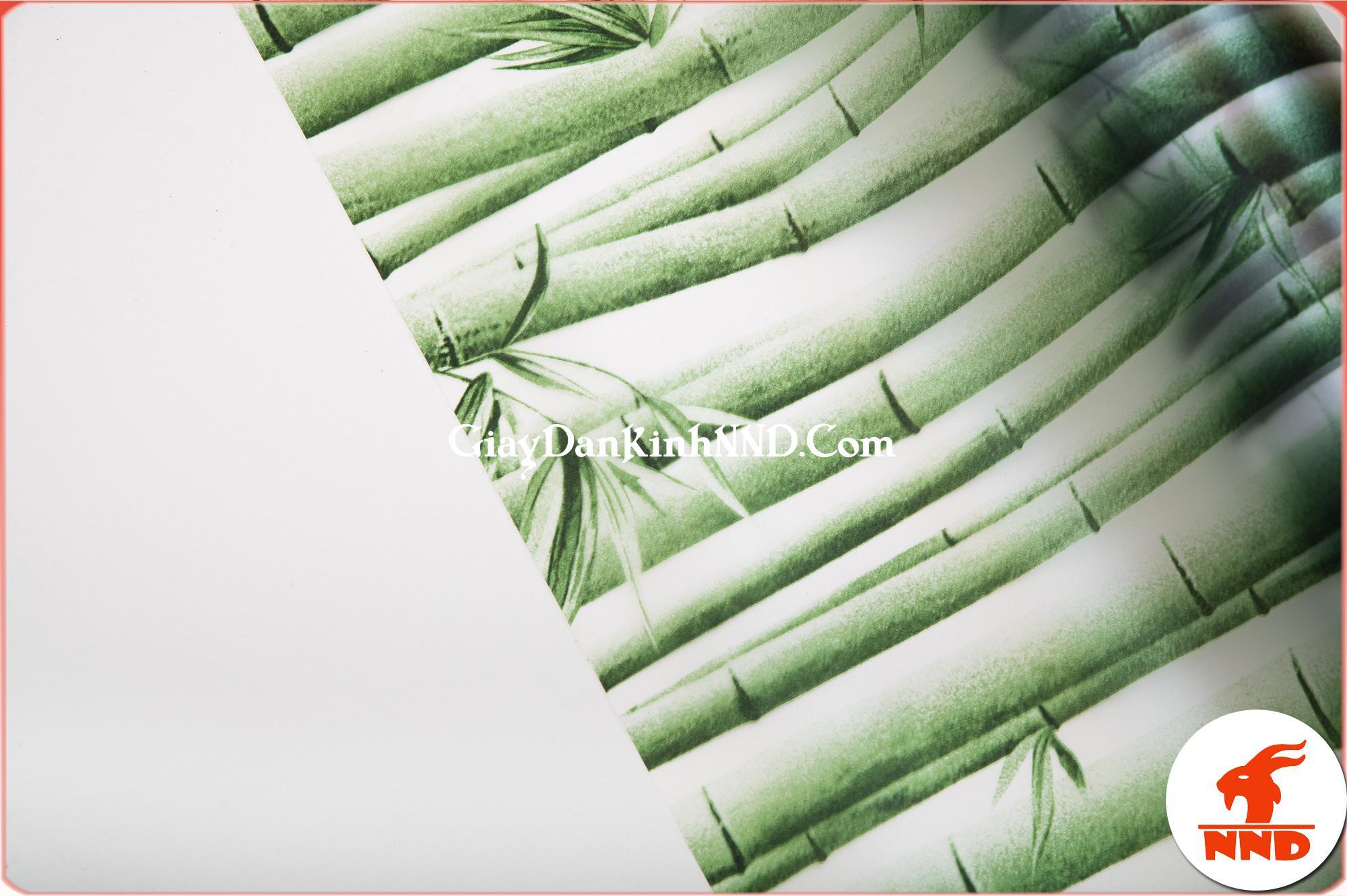 Mẫu giấy dán kính hoa văn hình cây trúc xanh vô cùng bắt mắt